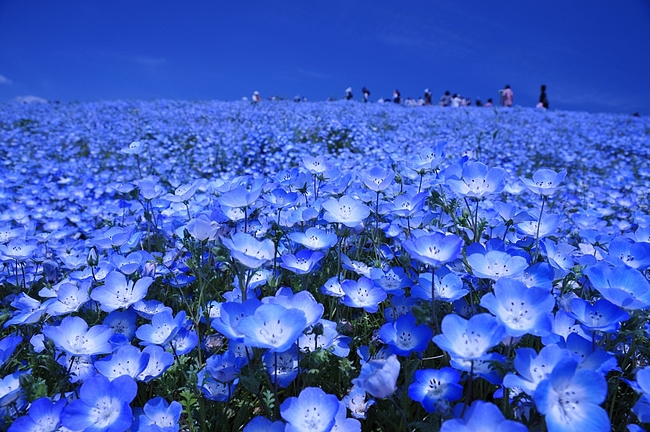 Magnificent Flower Gardens Near Tokyo | TripleLights by ...