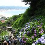 Hydrangea Temple Gardens in Kamakura