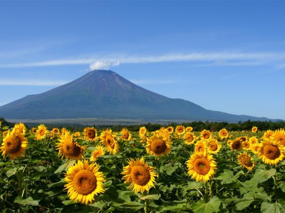 Mt-Fuji-summer