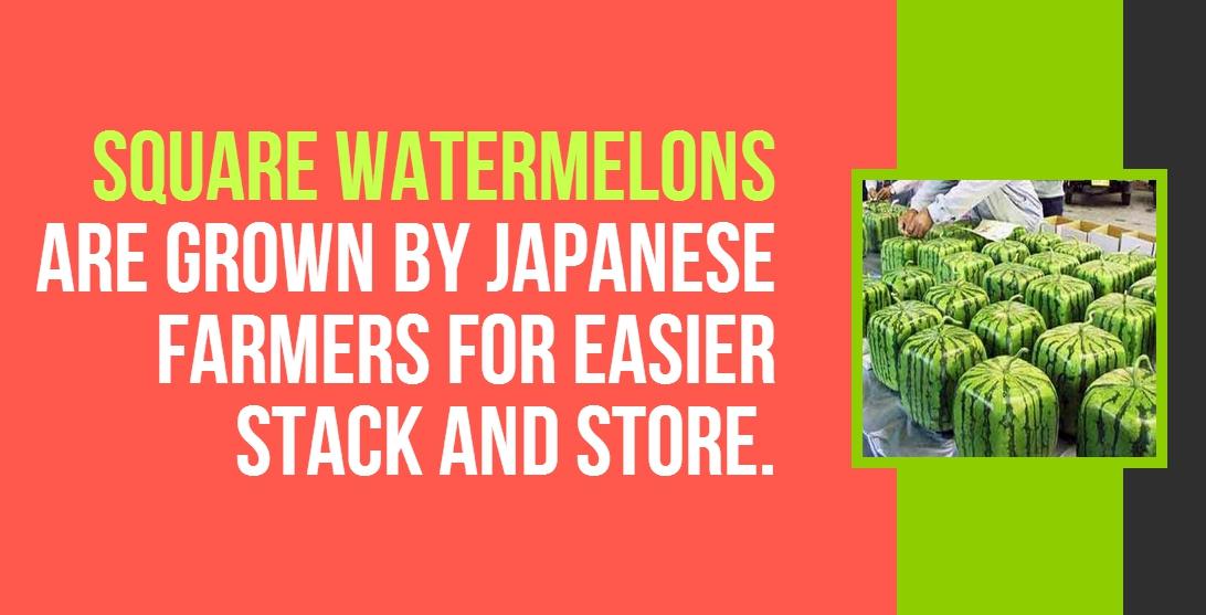 8_watermelon