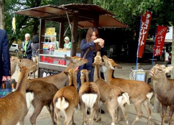 Nara_Deer_11