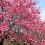 Spring Festivals near Tokyo!!